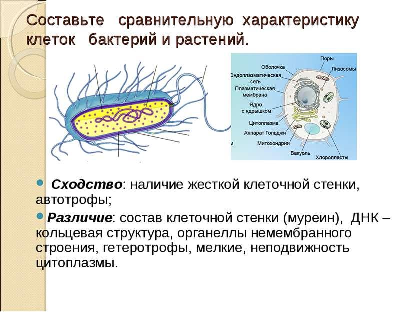 Составьте сравнительную характеристику клеток бактерий и растений. Сходство: ...