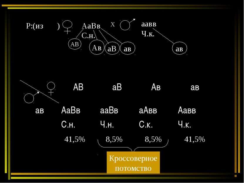 Р:(из ) АаВв С.н. Х аавв Ч.к. 41,5% 8,5% 8,5% 41,5% Кроссоверное потомство АВ...
