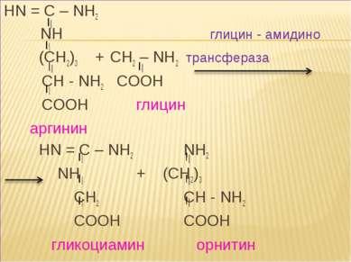 HN = C – NH2 NH глицин - амидино (CH2)3 + CH2 – NH2 трансфераза CH - NH2 COOH...
