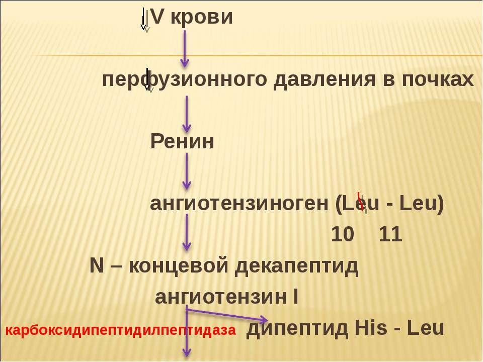 V крови перфузионного давления в почках Ренин ангиотензиноген (Leu - Leu) 10 ...