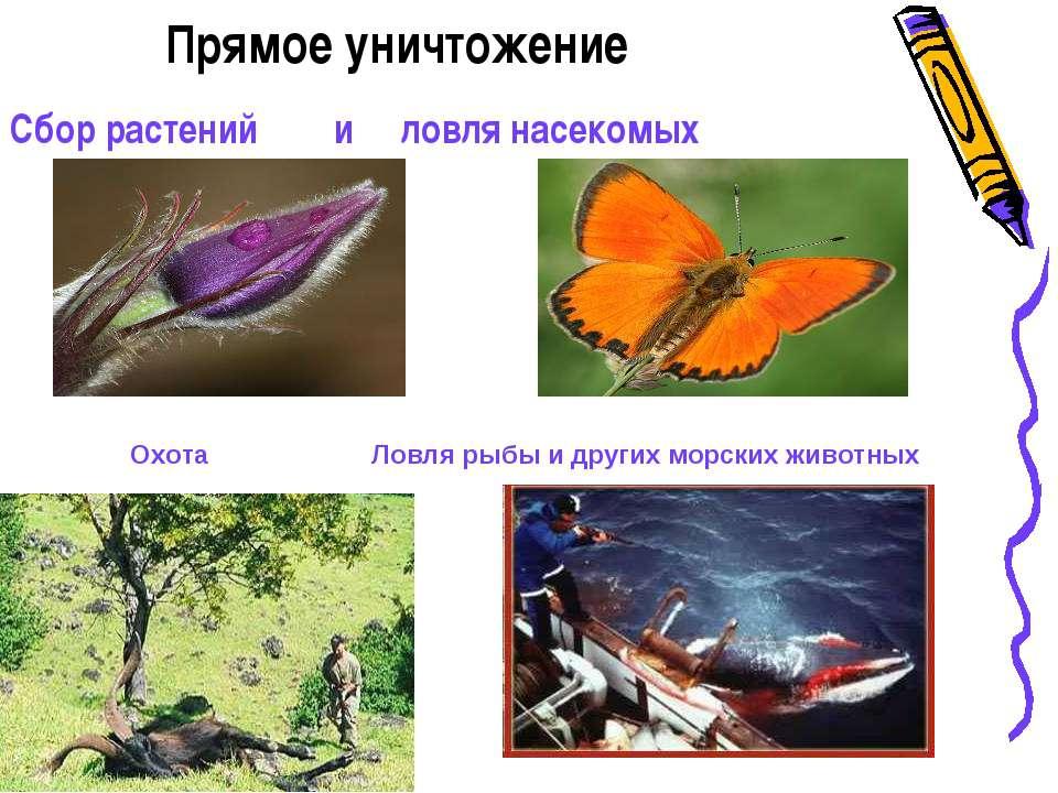 Прямое уничтожение Сбор растений и ловля насекомых Охота Ловля рыбы и других ...