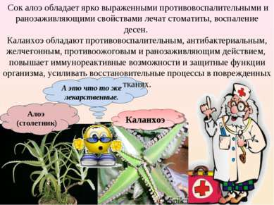 А это что то же лекарственные. Алоэ (столетник) Каланхоэ Сок алоэ обладает яр...