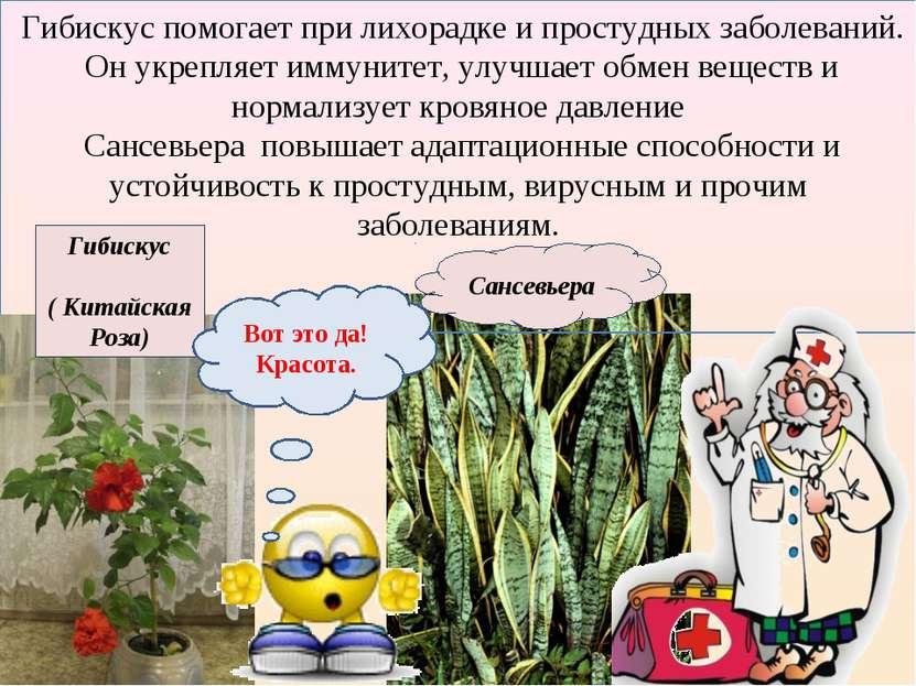 Гибискус помогает при лихорадке и простудных заболеваний. Он укрепляет иммуни...