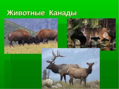 Животные Канады