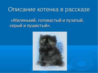 Описание котенка в рассказе «Маленький, головастый и пузатый, серый и пушистый».