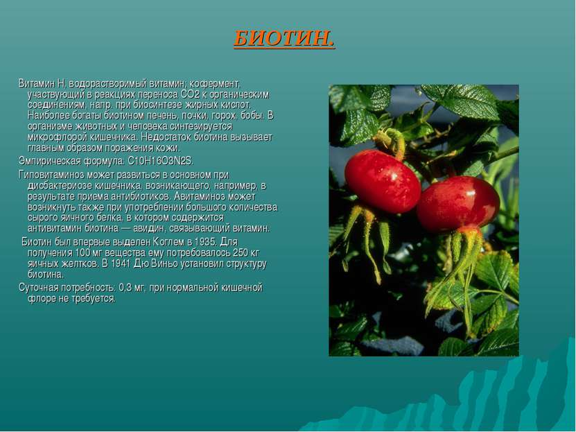 БИОТИН. Витамин H, водорастворимый витамин; кофермент, участвующий в реакциях...