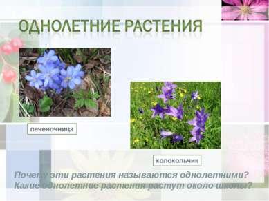 Почему эти растения называются однолетними? Какие однолетние растения растут ...