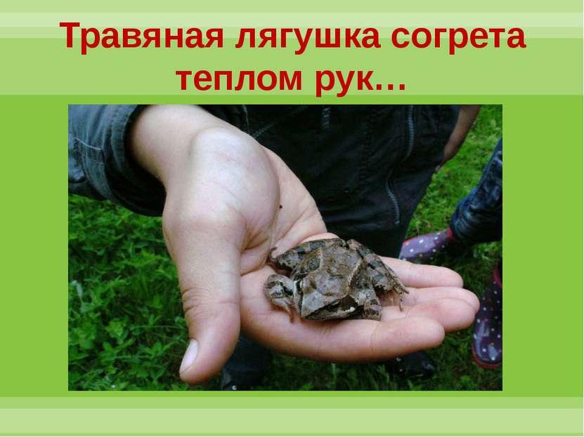 Травяная лягушка согрета теплом рук…