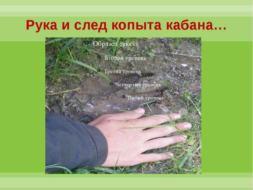 Рука и след копыта кабана…
