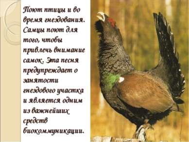 Поют птицы и во время гнездования. Самцы поют для того, чтобы привлечь вниман...