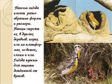 Птичьи гнёзда имеют разно-образные формы и размеры. Птицы строят их в дуплах ...