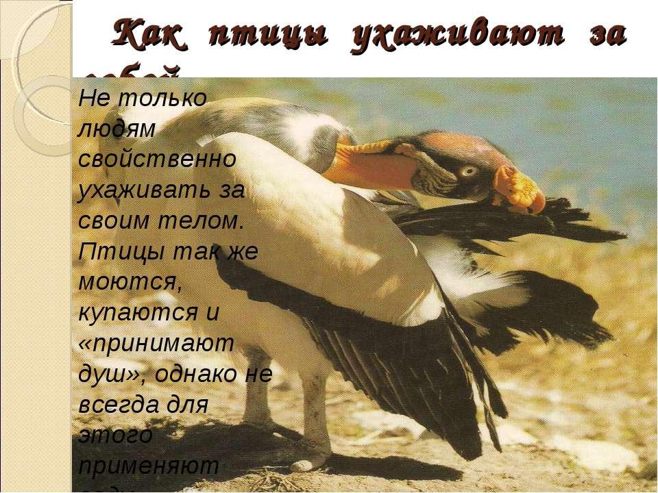Как птицы ухаживают за собой Не только людям свойственно ухаживать за своим т...