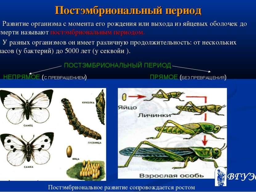 Постэмбриональный период Развитие организма с момента его рождения или выхода...