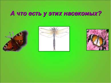 А что есть у этих насекомых?
