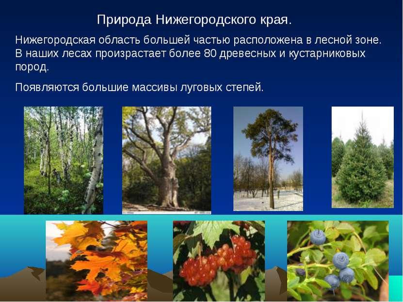 Природа Нижегородского края. Нижегородская область большей частью расположена...