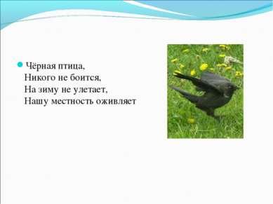 Чёрная птица, Никого не боится, На зиму не улетает, Нашу местность оживляет