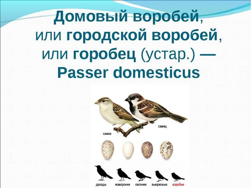 Домовый воробей, илигородскойворобей, илигоробец(устар.)— Passer domesticus