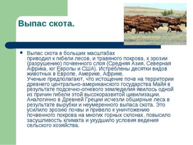 Выпас скота. Выпас скота в больших масштабах приводил к гибели лесов, и травя...