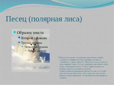 Песец (полярная лиса) Морской лед делает доступными для наземных зверей остро...