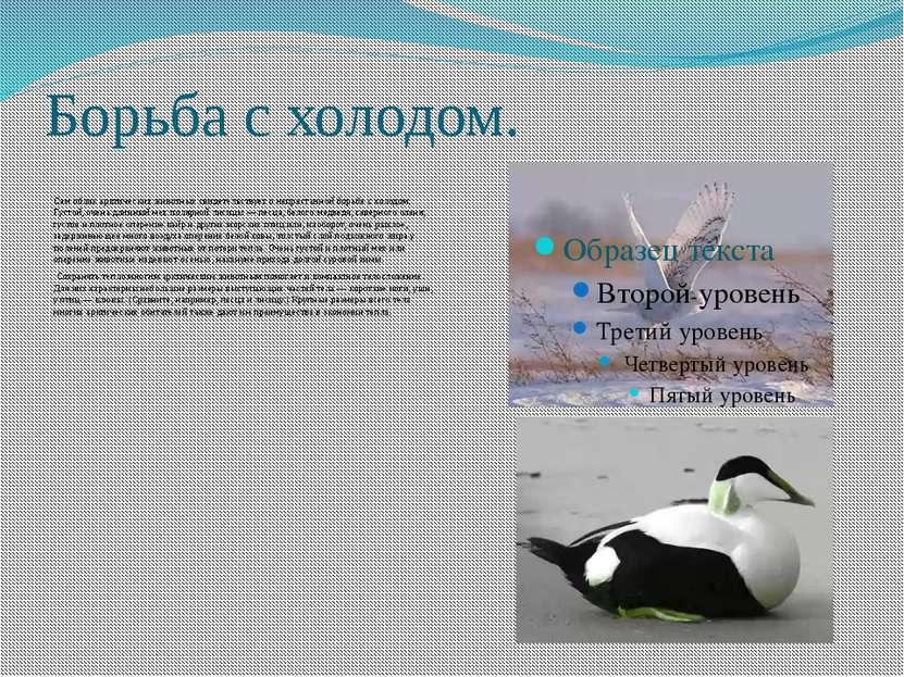 Борьба с холодом. Сам облик арктических животных свидетельствует о непрестанн...