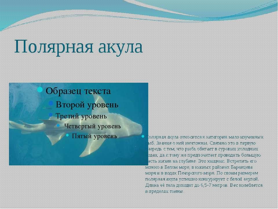 Полярная акула Полярная акула относится к категории мало изученных рыб. Знани...