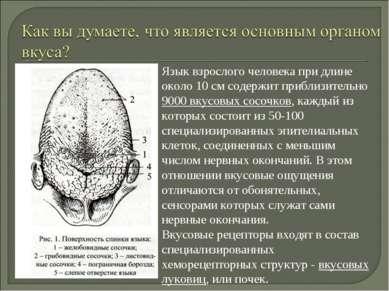 Язык взрослого человека при длине около 10 см содержит приблизительно 9000 вк...