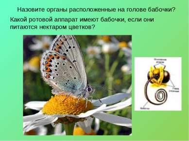 Назовите органы расположенные на голове бабочки? Какой ротовой аппарат имеют ...