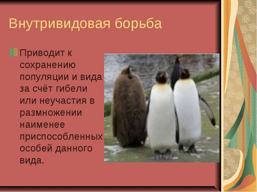 Внутривидовая борьба Приводит к сохранению популяции и вида за счёт гибели ил...
