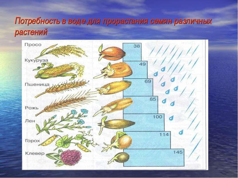 Потребность в воде для прорастания семян различных растений