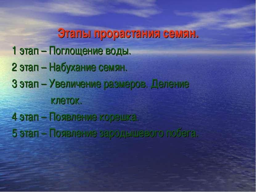 Этапы прорастания семян. 1 этап – Поглощение воды. 2 этап – Набухание семян. ...