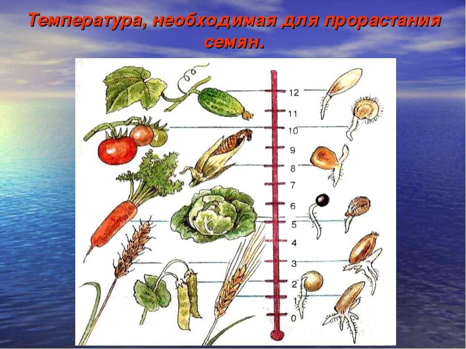 Температура, необходимая для прорастания семян.
