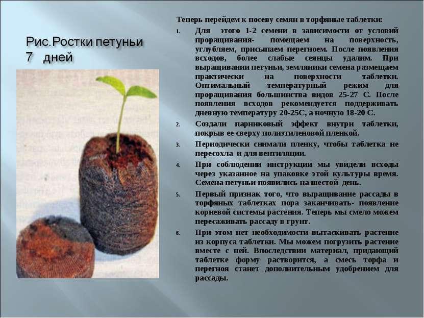 Теперь перейдем к посеву семян в торфяные таблетки: Для этого 1-2 семени в за...