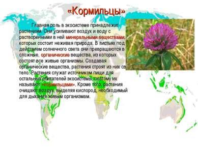 «Кормильцы» Главная роль в экосистеме принадлежит растениям. Они усиливают во...