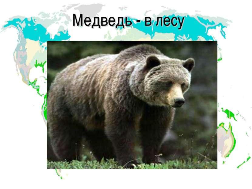 Медведь - в лесу
