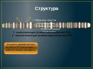 Структура 2 1 1 - комплементарні ділянки одноланцюгової РНК 2 - некомплемента...
