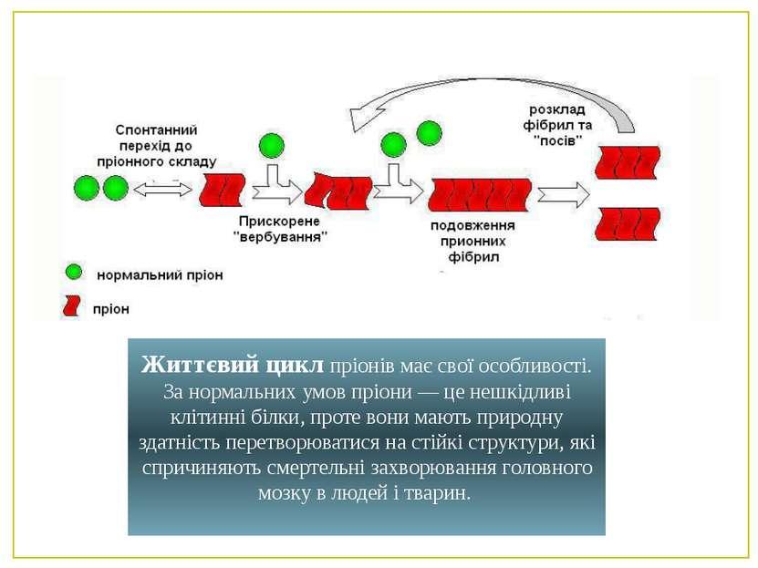 Життєвий цикл пріонів має свої особливості. За нормальних умов пріони — це не...