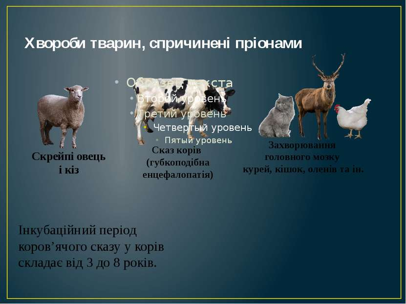 Хвороби тварин, спричинені пріонами Скрейпі овець і кіз Сказ корів (губкоподі...