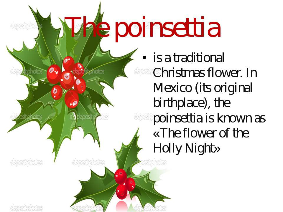 The poinsettia is a traditional Christmas flower. In Mexico (its original bir...