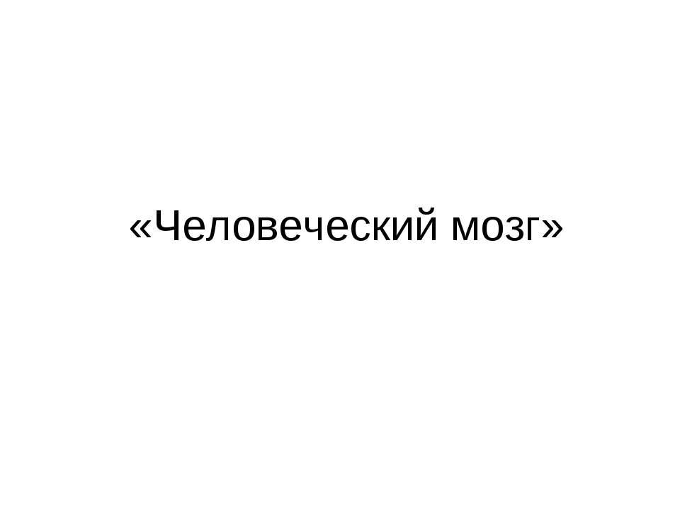 «Человеческий мозг»