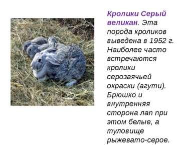 Кролики Серый великан. Эта порода кроликов выведена в 1952 г. Наиболее часто ...