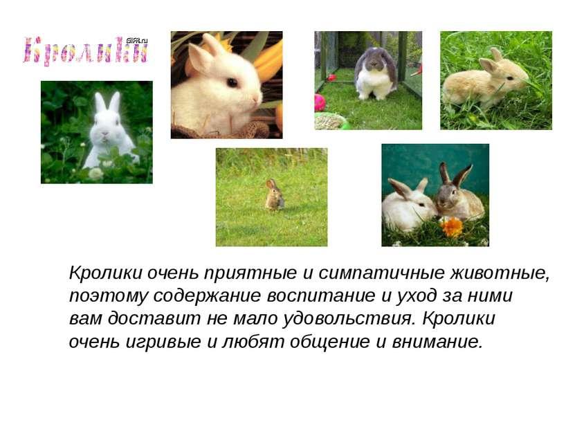 Кролики очень приятные и симпатичные животные, поэтому содержание воспитание ...