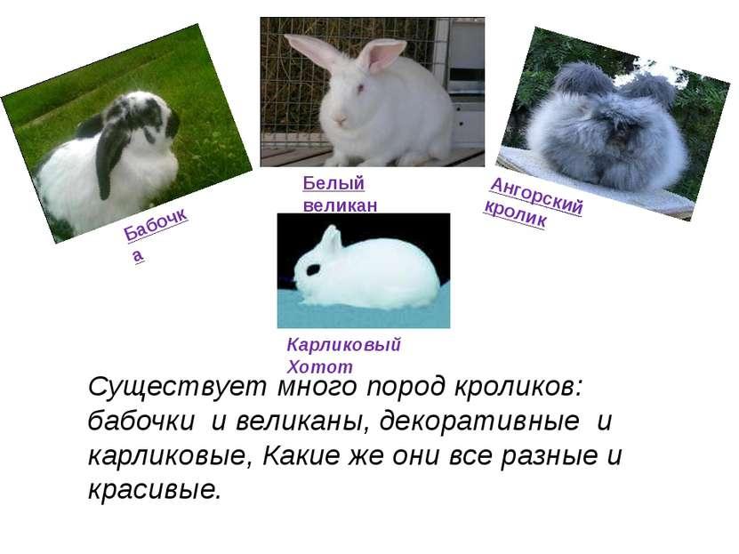 Существует много пород кроликов: бабочки и великаны, декоративные и карликовы...