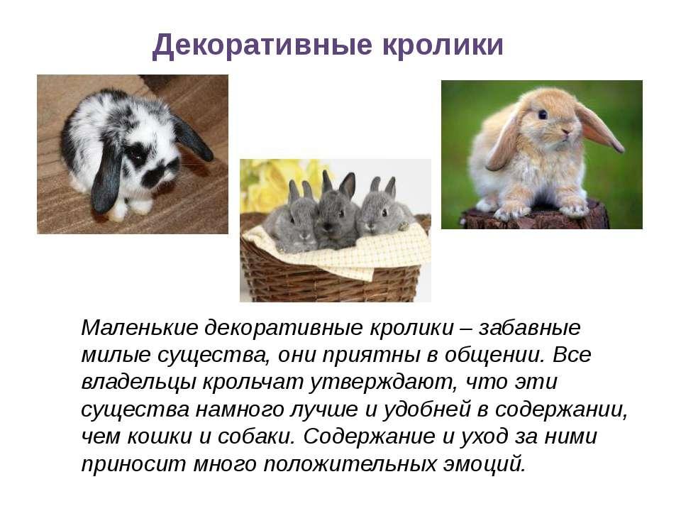 Декоративные кролики Маленькие декоративные кролики – забавные милые существа...