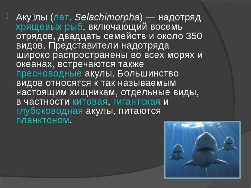 Аку лы (лат. Selachimorpha) — надотряд хрящевых рыб, включающий восемь отрядо...
