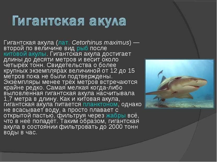 Гигантская акула (лат. Cetorhinus maximus) — второй по величине вид рыб после...