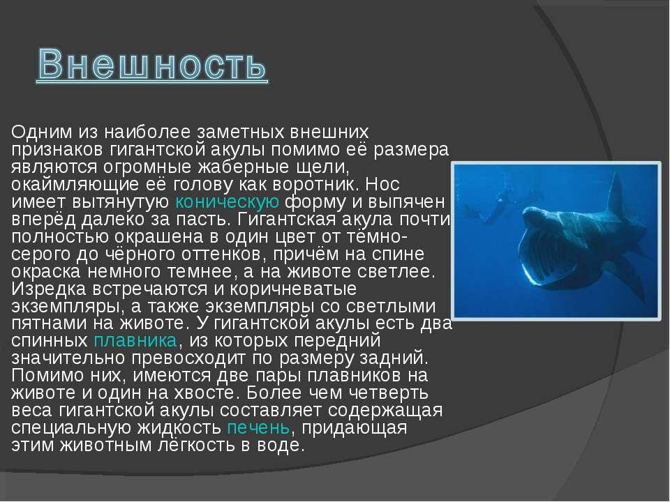 Одним из наиболее заметных внешних признаков гигантской акулы помимо её разме...