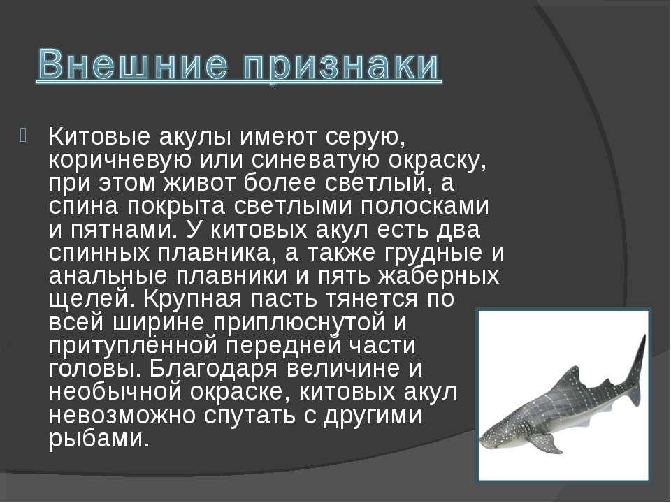 Китовые акулы имеют серую, коричневую или синеватую окраску, при этом живот б...