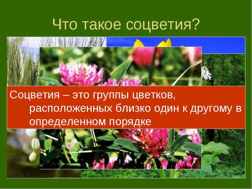 Что такое соцветия? Соцветия – это группы цветков, расположенных близко один ...