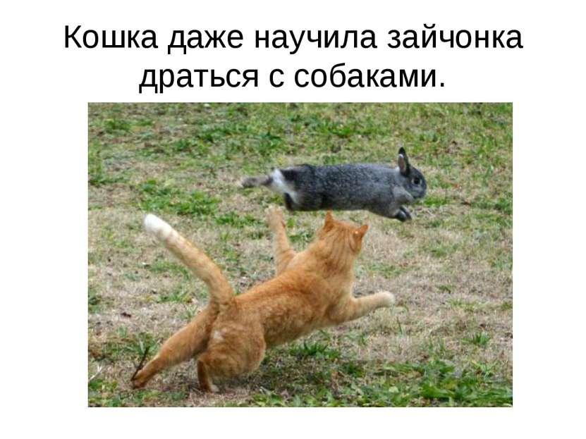 Кошка даже научила зайчонка драться с собаками.
