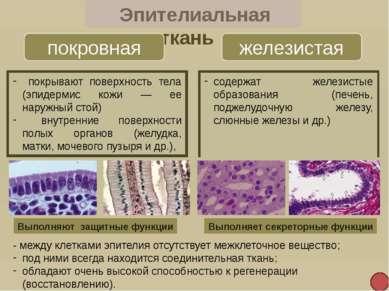 Нервная ткань Нейроны нервные клетки 1. Тело 2. Дендриты 3. Аксон 4. Нервные ...